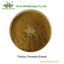Supply Best Quality Natural Tribulus Terrestris Extract In Powder Form