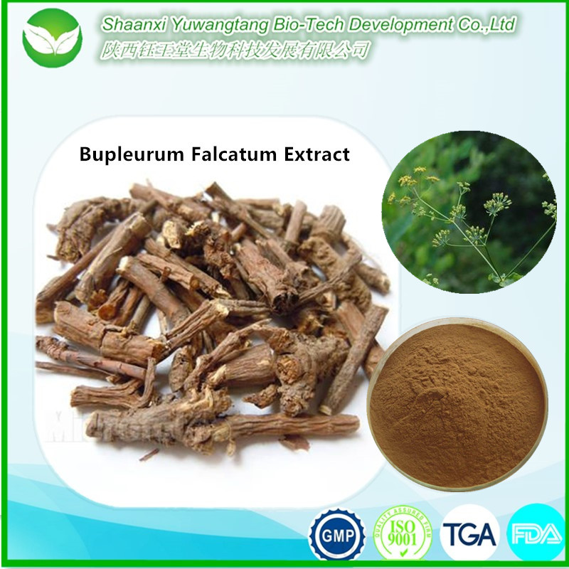 100% health organic natural product chai hu extract, Bupleurum Root Extract
