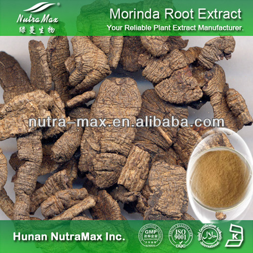 High Quality Morinda Officinalis Root Extract 10:1 20:1--NutraMax Supplier