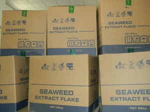 NPK type seaweed extract fertilizer For golf lawn