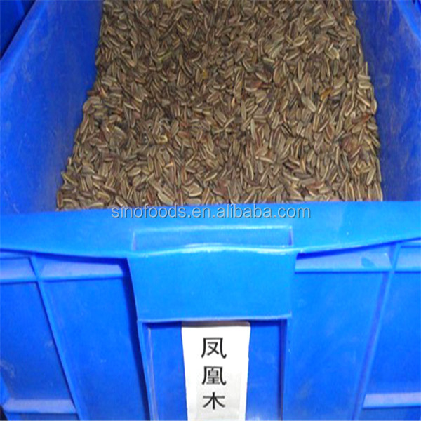 Feng huang mu wholesale plant flower bulbs Poinciana Seeds