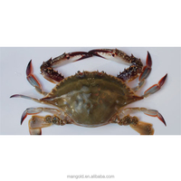 Good Taste Seafood Fresh Live Crab