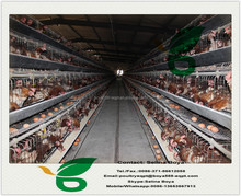 chickens cage with automatic drinking system and egg collector