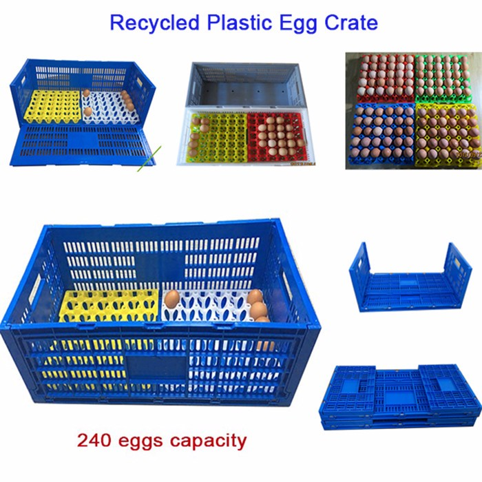Egg packaging food grade plastic container