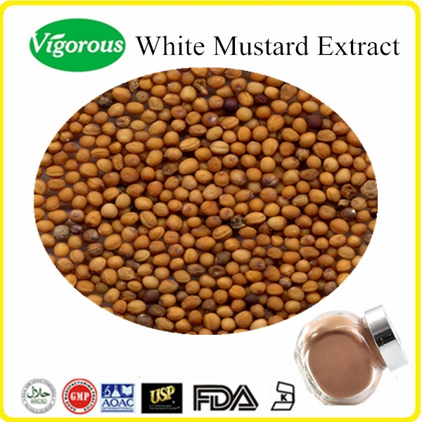 Pure natural White Mustard Extract/White Mustard Extract Powder/Sinapis alba seed powder