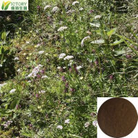 Natural extract organic herbal valerian
