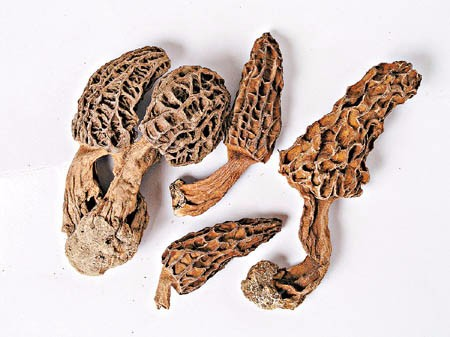 Dried black morel mushroom kinds of edible mushroom export price