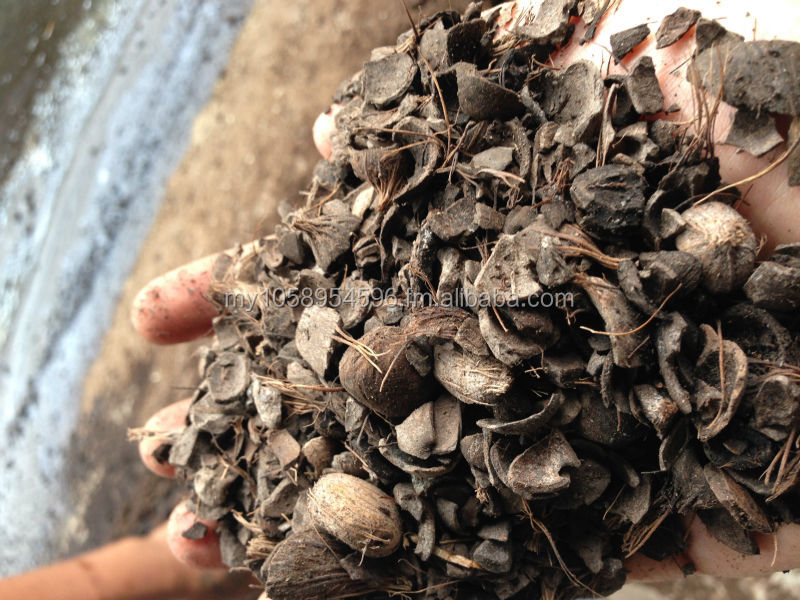Fresh Palm Kernel Shell