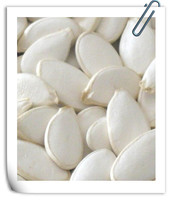 Origanic Pumpkin Seeds , China Origin 2014 Crop 11cm-13cm