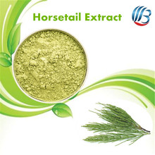LanBing supply horsetail extract powder equisetum arvense extract