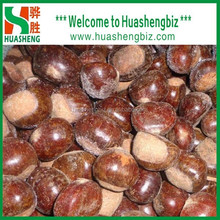 China cheap fresh chestnut with good quality