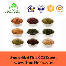 GMP Manufacture Kosher Approved hot sale moringa leaf powder price