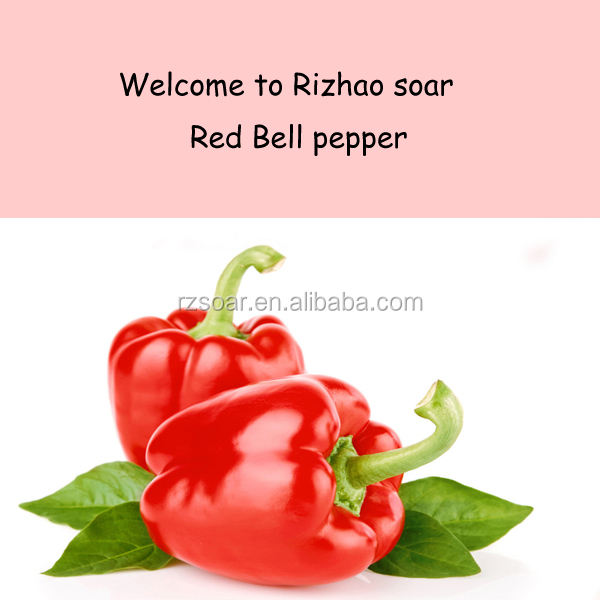 IQF Red bell pepper to Europe