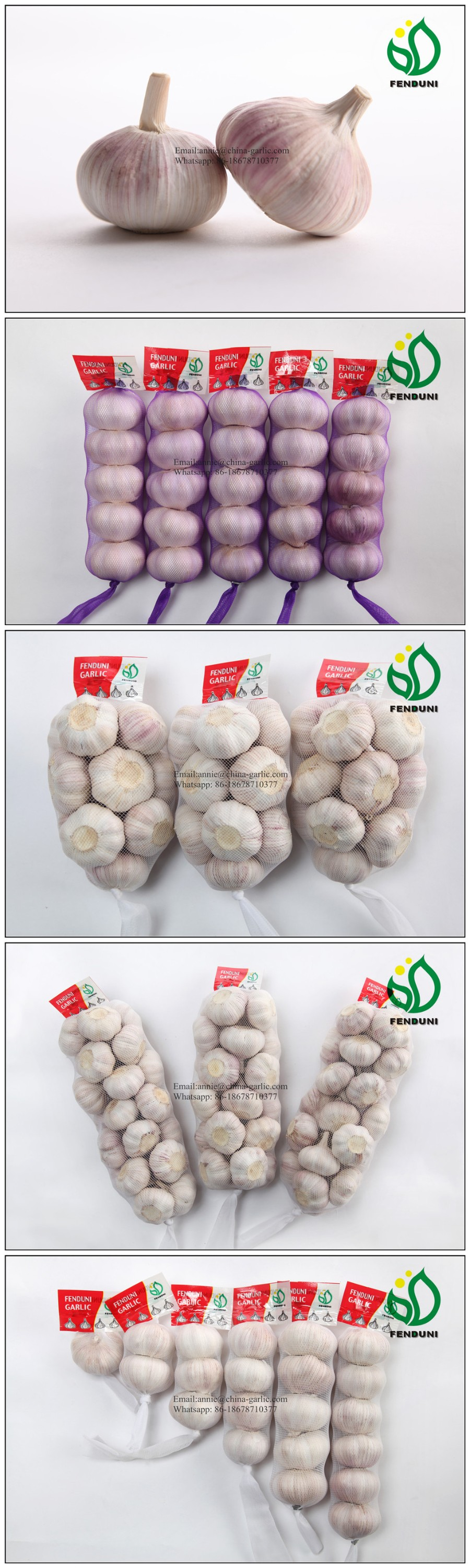 Hot Sale Chinese Fresh Garlics for International Market