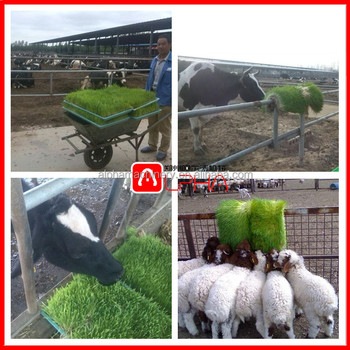 Fodder machine barley grass growing system hydroponic goat farm equipment