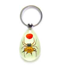 Funky luminous real insects Red bean horn spider custom acrylic charm keychain