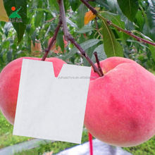 Fresh Fruit Tree Grow Paper Protection Packing Bags