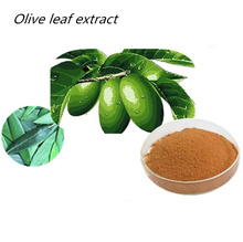 free sample HACCP KOSHER FDA certified supplier high quality wholesale in bulk leaf extract powder 10% 20% olive polyphenol