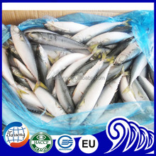 Pacific Mackerel Frozen Mackerel Fish