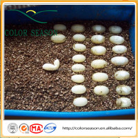 Expanded vermiculite for reptile egg incubation