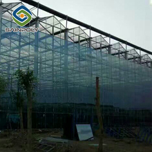 low cost agricultural strawberry glass greenhouse farming