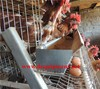 Zimbabwe cheaper and hot sale Egg laying chicken cages