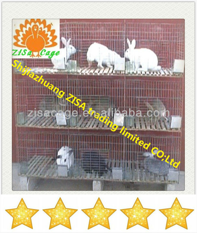 rabbit farming cage in zambia