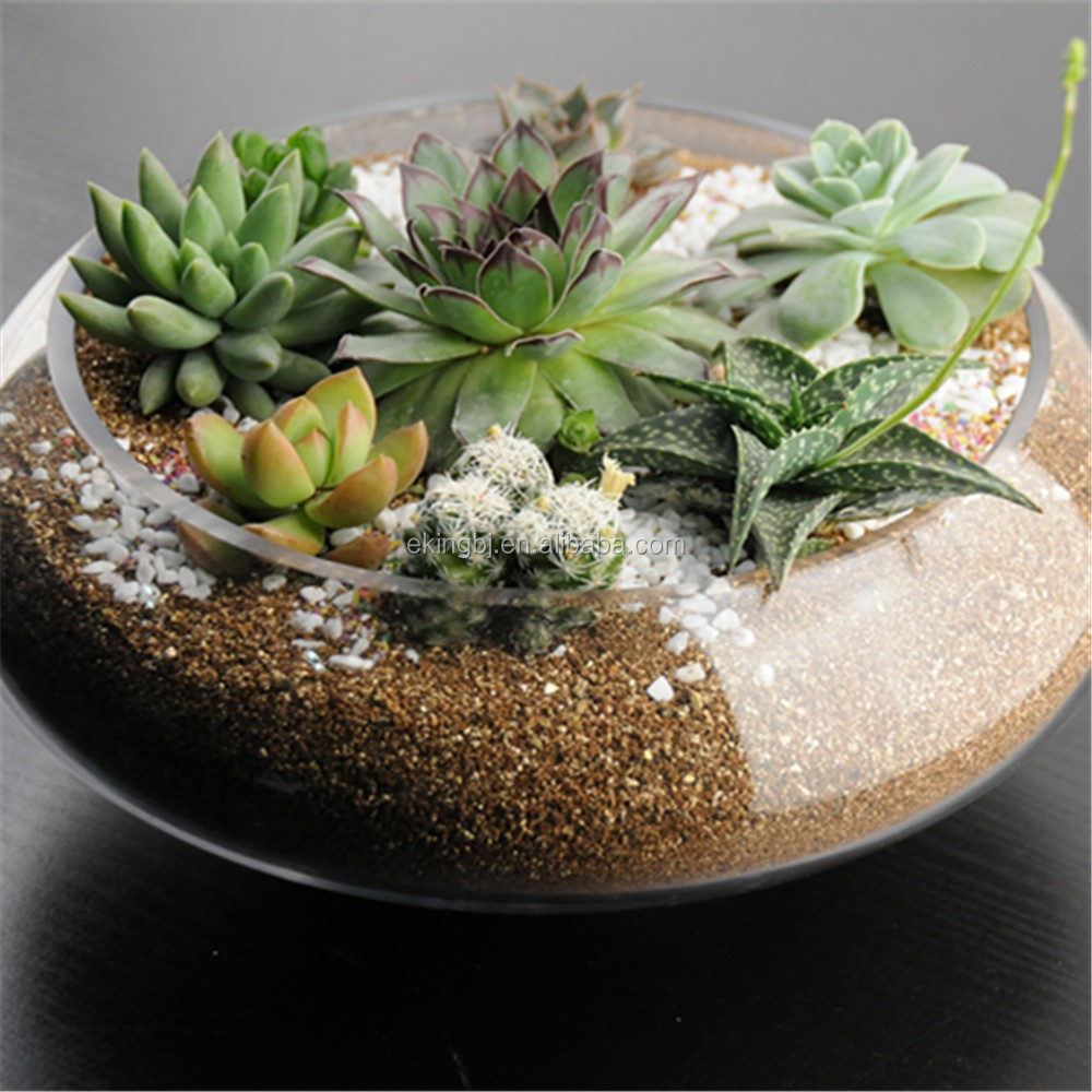 Terrarium Plants Glass Bowl Ml202 - Buy Glass Bowl,Glass Goldfish Bowl,Terriarium  Palnts Product on Alibaba.com - Terrarium Plants Glass Bowl Ml202 - Buy Glass Bowl,Glass Goldfish