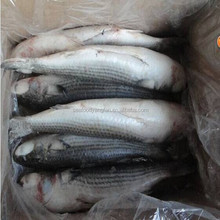 China Land frozen Roe off Grey mullet and mugil cephalus