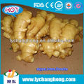 fresh ginger and garlic/organic fruit and vegetable for dubai wholesale market