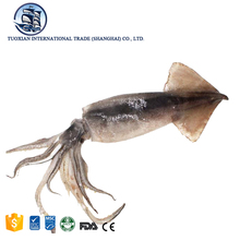 Frozen seafood large giant illex squid