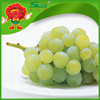factory price good quality Thompson Seedless Green Grapes bulk sell