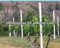 Galvanized metal vineyard stake to support the grape