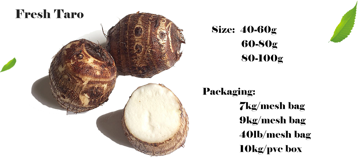 Fresh Taro Root 60g up Export Prices 7kg/mesh bag in China