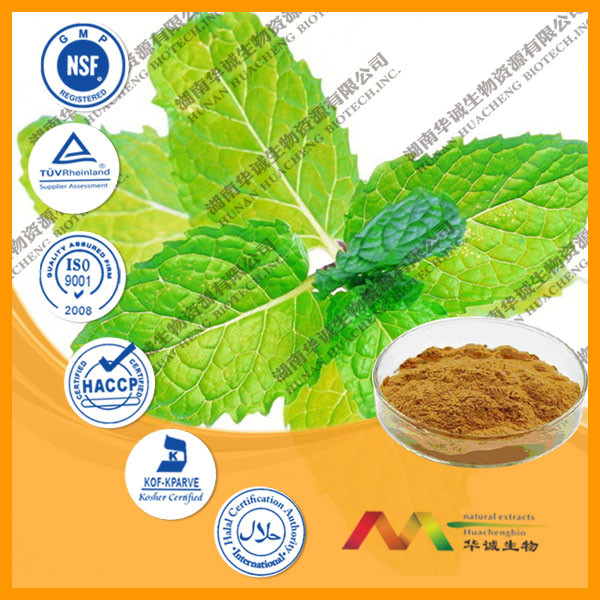 GMP Supplier Bottom Price 5%~20% Menthol Mentha Piperita Extract