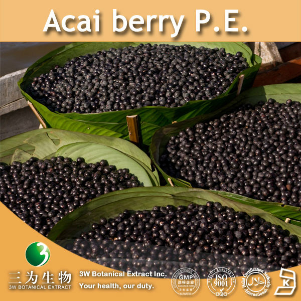 3W supply Acai berry P.E. 4:1 10:1