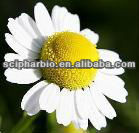 Pure Chamomile Extract Liquid
