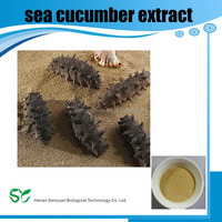 Top Quality From 10 Years experience manufacture sea cucumber extract