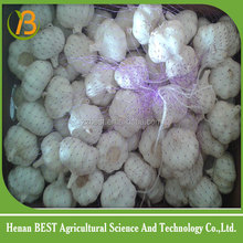 China good quality garlic farm/ fresh vegetable