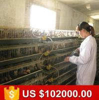 No rust quality galvanized battery quail cages