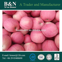 China cheap planting apple seeds for tree of CE and ISO9001 standard