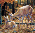 Hot sale lenticular picture of deer image with deep 3d effect