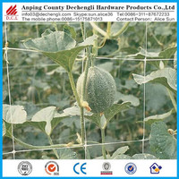 plant climbing net /PP stretch plant climbing net for flowers and vegetables