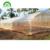 Single Tunnel Greenhouse Economical for large scale growth