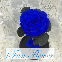 Brand new high quality blue rose preserved roses in glass dome