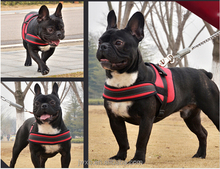 explosion proof pet safety harness for sale
