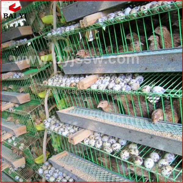Bird Quail Cage Metal Pet Feeder Quail Farming