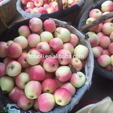 Fresh Fruits Sweet Gala Apples 2017 new crop