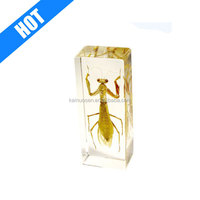 REAL acrylic resin insects