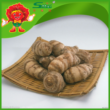 New crop vegetable taro chinese fresh taro